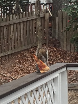 Squirrel with a slice of pizza