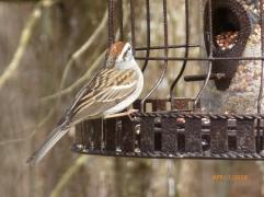 Sparrow at our birdfeeder